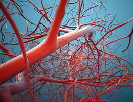 Cardiovascular disease is not heart disease — and other myths
