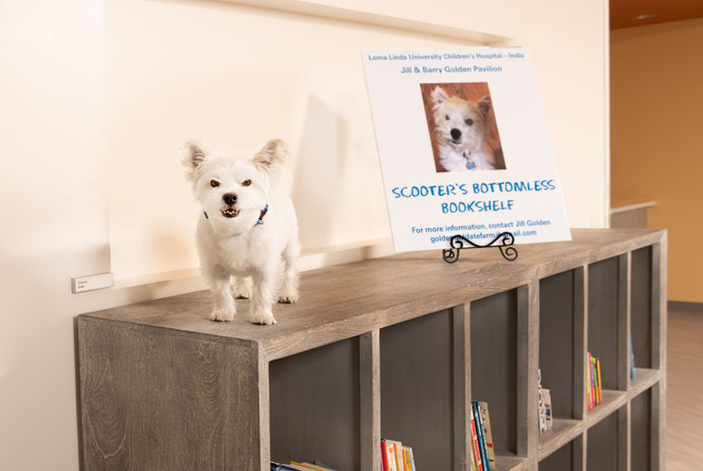 Scooter dog standing atop a bookshelf